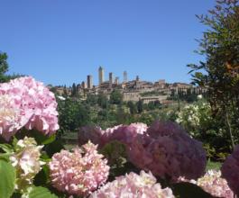 gardenie_giardino